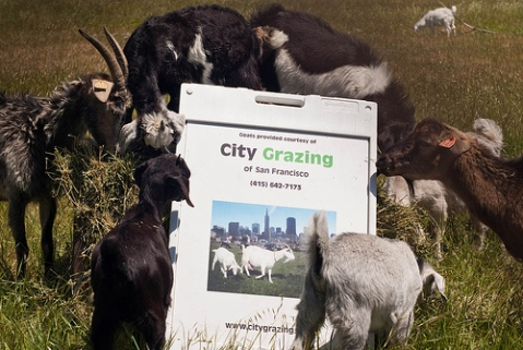 City Grazing Sign